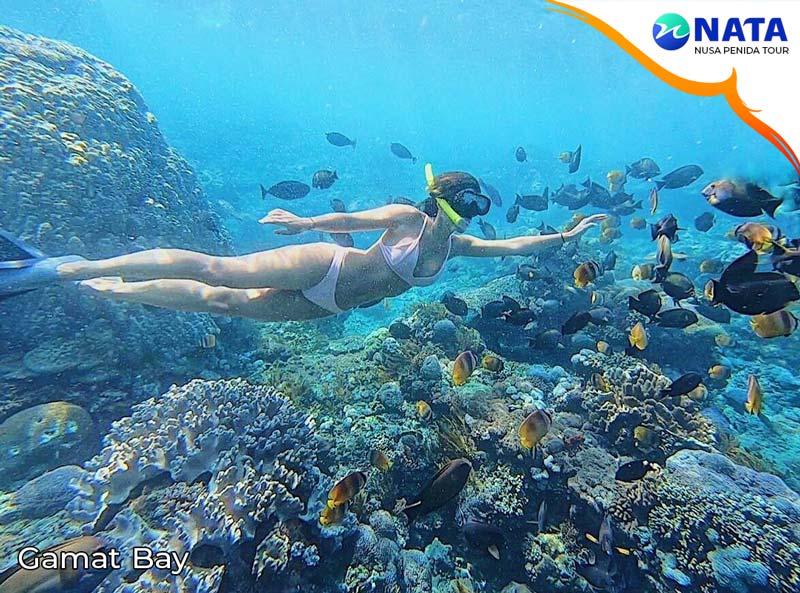 nusa penida snorkeling gamat bay