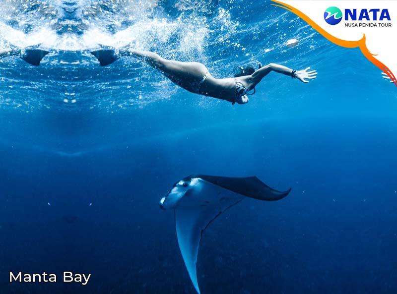 Manta bay Nusa Penida snorkeling