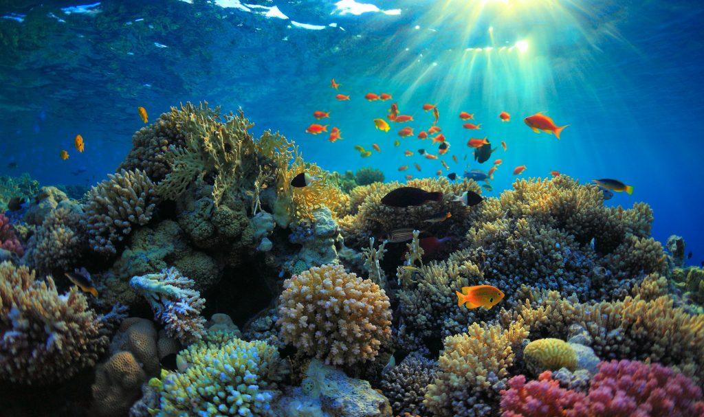 Underwater view Nusa Penida